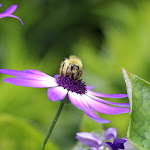 2013_06_01_Bees