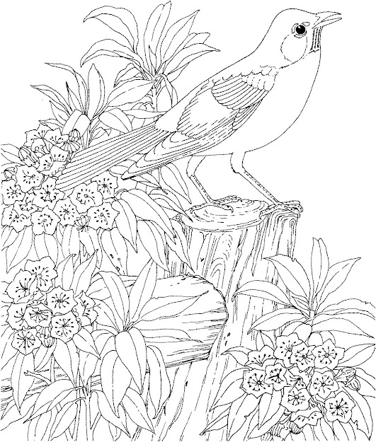 Difficult Animals Coloring Pages For Adults Selfcoloringpages Inside Hard Coloring  Pages Adults
