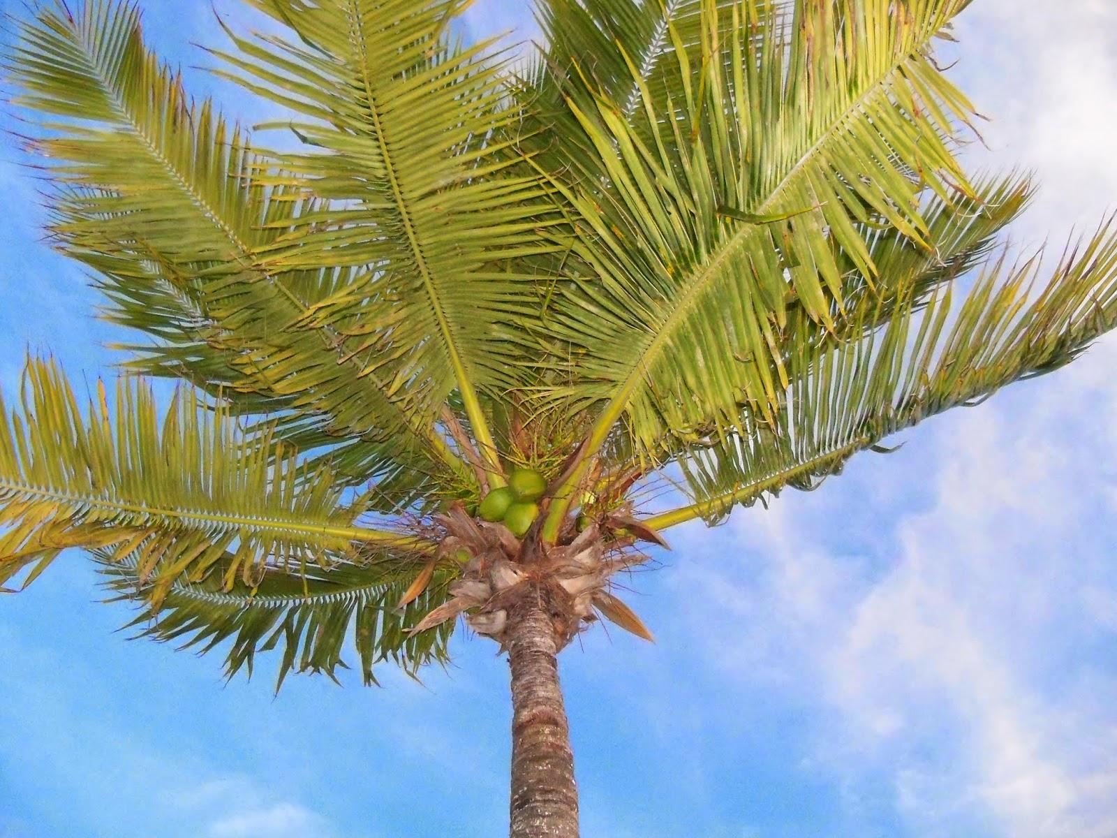 Key West Vacation - 116_5550.JPG