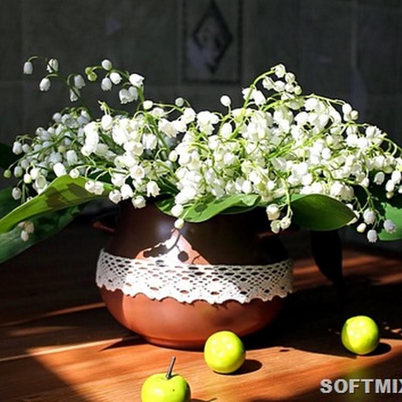 Цветы, которые лучше никому не дарить