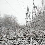 Вырубки ЛЭП в Воронежской Нагорной Дубраве 043.jpg