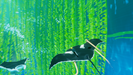 AbzuGame-Win64-Shipping 2016-08-06 14-34-29-460