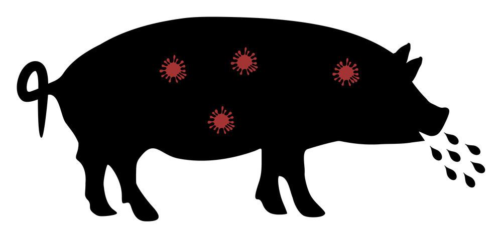 African swine fever virus