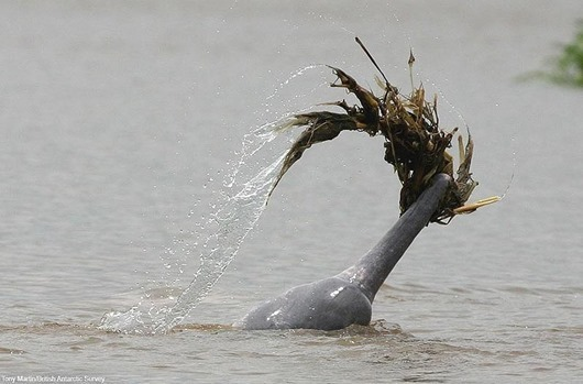 must credit:Tony Martin/British Antarctic Survey
