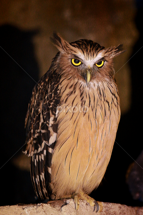 OWL by Esther Pupung - Animals Birds