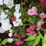 Gardening 2012 - 115_2654.JPG