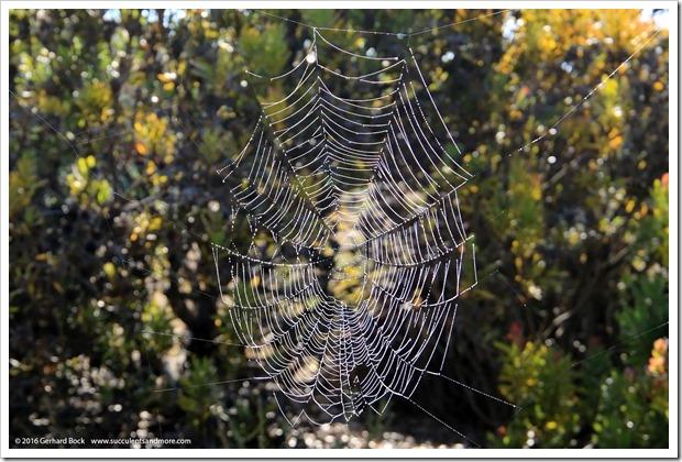 160813_UCSC_Arboretum_024