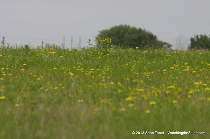 2013 Spring Flora & Fauna - IMGP6373.JPG