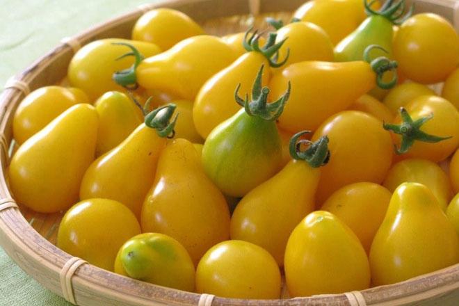 Cà chua bi hình trái lê gây sốt tại Việt Nam - 55c961b166b04