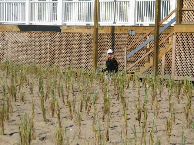 West Wharf Dune Restoration - IMG_8287.JPG