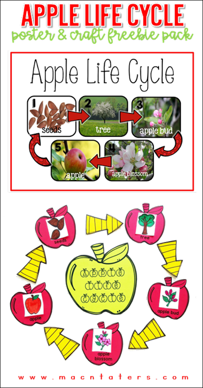 Apple Life Cycle Poster & Craft Freebie