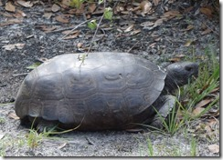 Tortoise-2