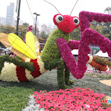 Hong Kong Flower Show 2013