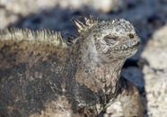 Ecuador-Galapagos-Baltra-180217-0079-ToWeb