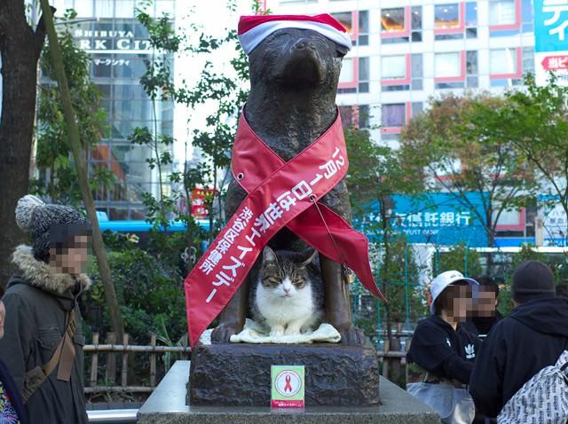 渋谷駅前のハチ公像。クリスマスの赤い帽子をかぶって、下で猫が寝てる。