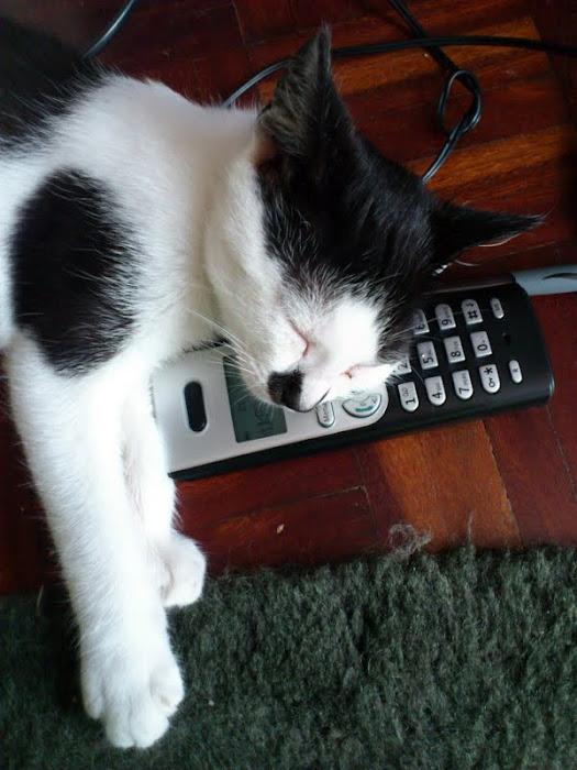sleeping in the telephone