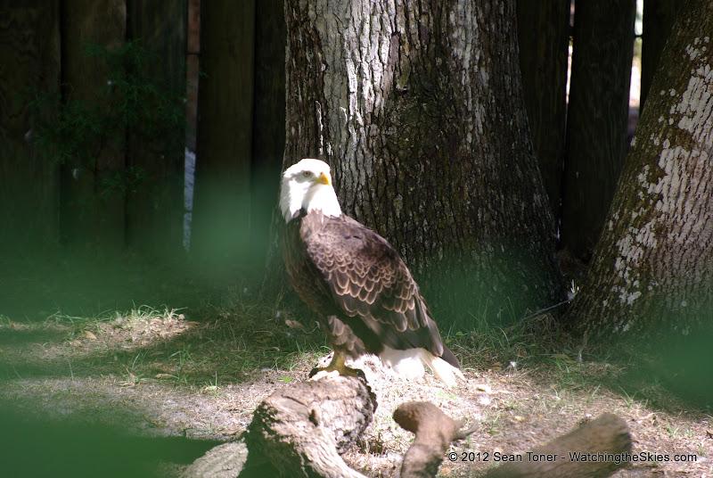 04-07-12 Homosassa Springs State Park - IMGP4570.JPG