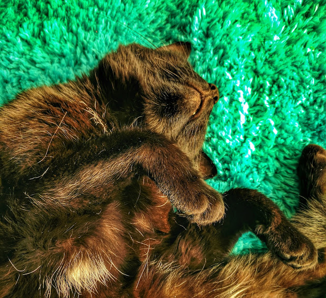Cat asleep on a bright green rug