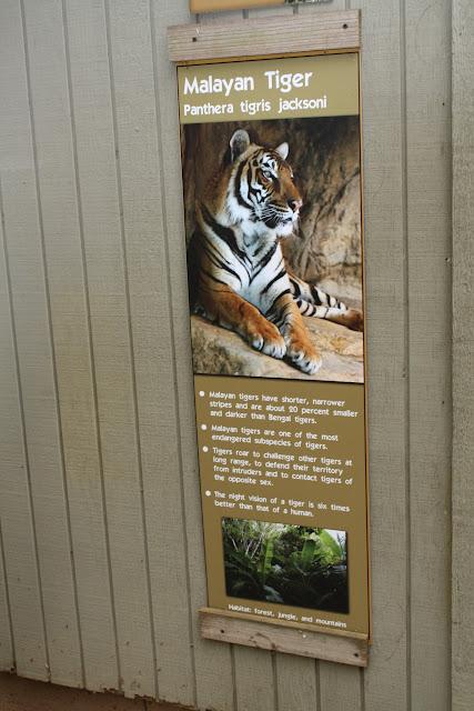 Zoo Snooze 2015 - IMG_7199.JPG