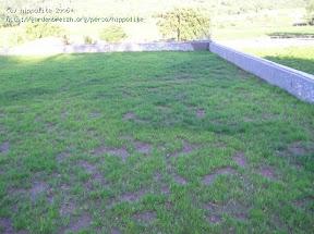 toiture en sphaigne 2006 la sphaigne est le substrat idéal pour les toitures végétales