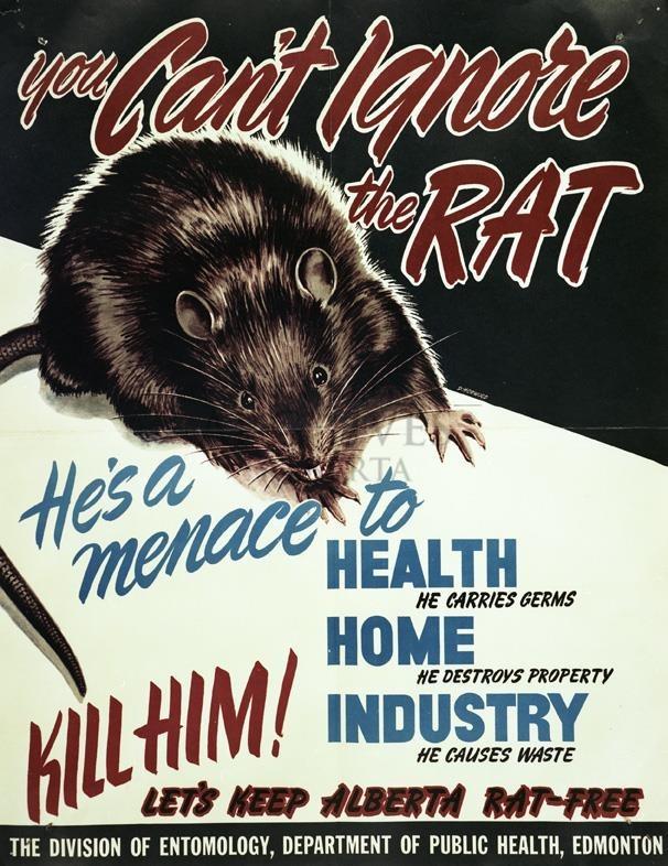 alberta-rats-2