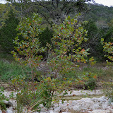 Fall Vacation 2012 - 115_3945.JPG