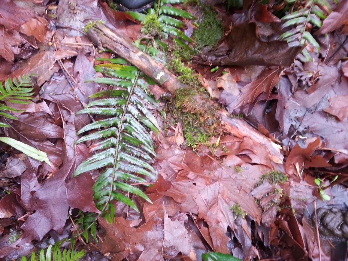 Leaf bruising, some transfer, and a broken stick.