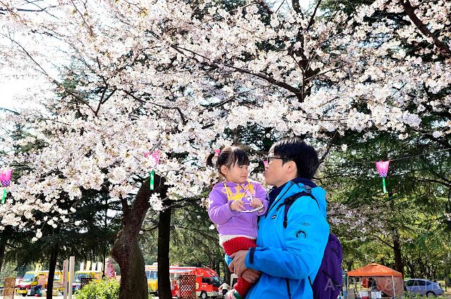 【日本關西必去必遊】名古屋鶴舞公園賞櫻花~小布妹愛旅行