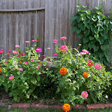 Gardening 2011 - 100_8509.JPG