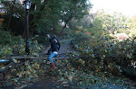 A third park bench that was destroyed by fallen tree limbs