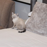 Sonia Kitten - Rehomed UK