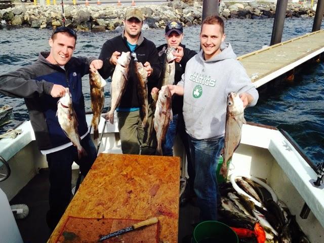 cod, haddock, pollack