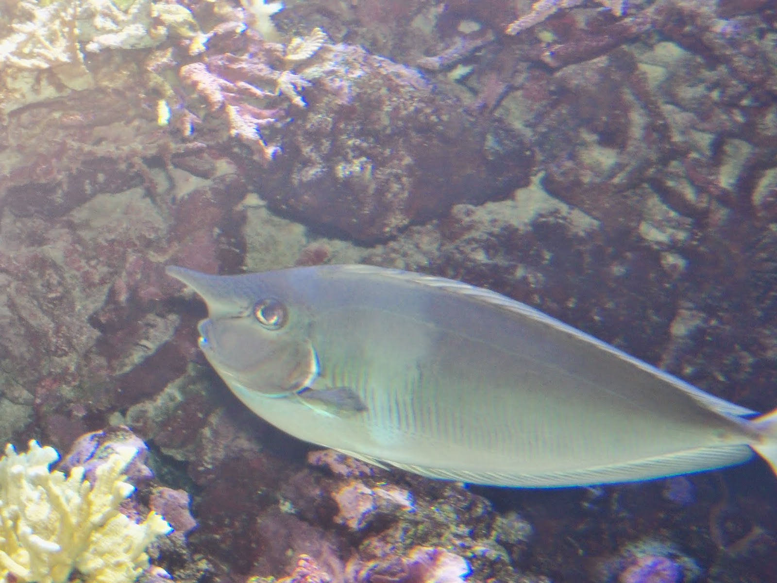 Downtown Aquarium - 116_3998.JPG