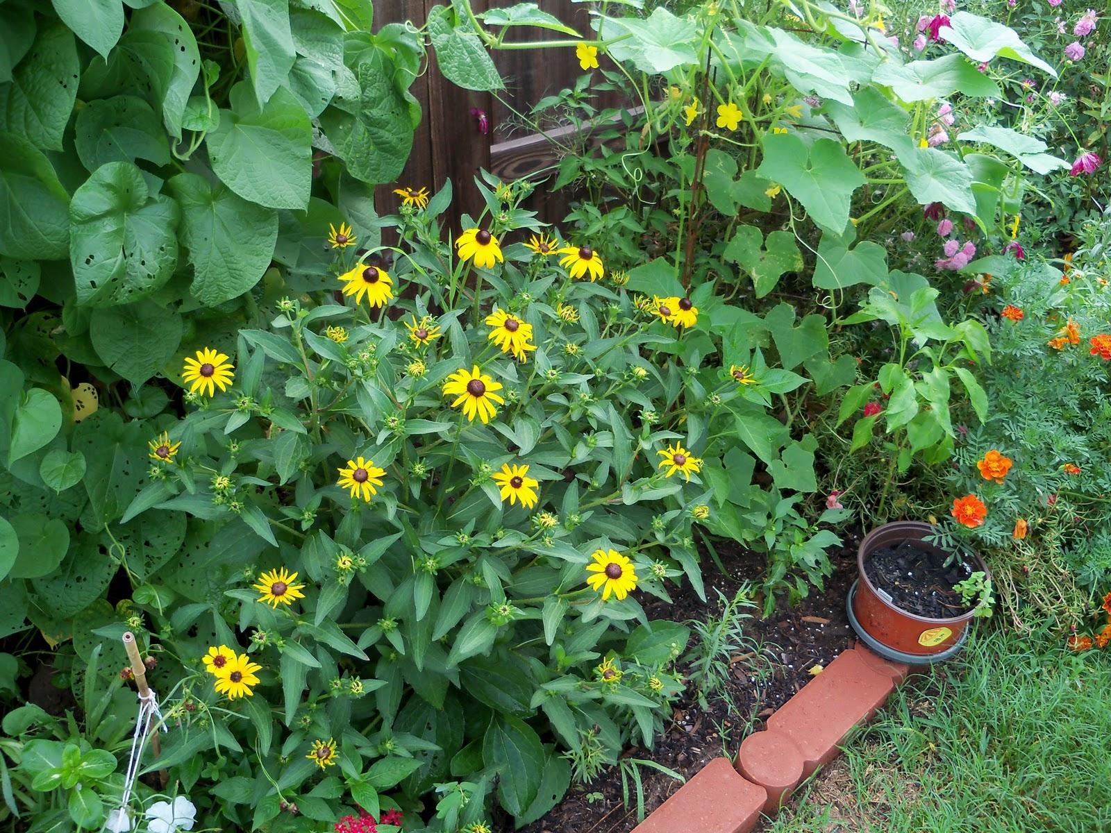 Gardening 2010, Part Three - 101_4735.JPG