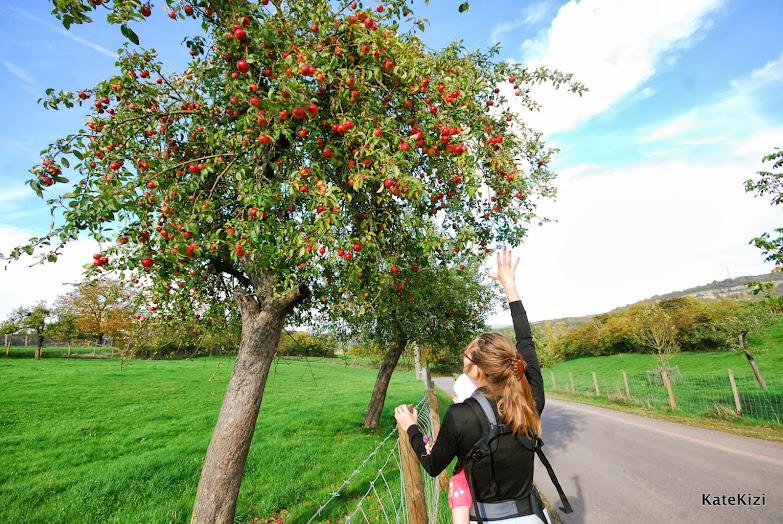За яблочками