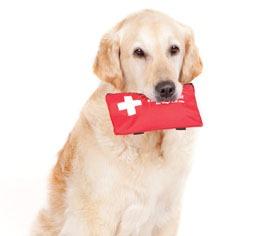 [Cachorro-primeiro-socorros%5B4%5D]