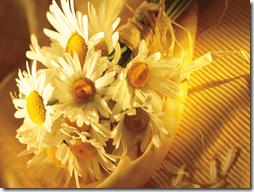 margaritas flores (3)