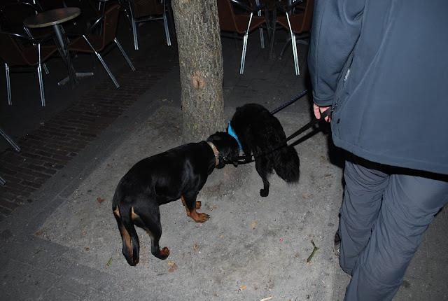 KNON-honden in Emmen - DSC_0848.JPG