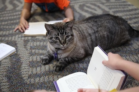 library-cat-fired_fran-1