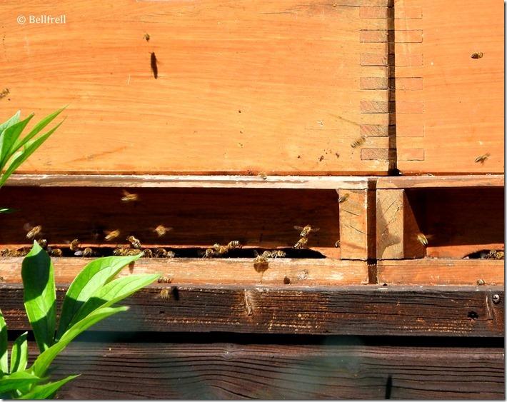 Bienenkobel 2