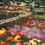 Mercat de Flor i Planta Ornamental de Catalunya - 85340044.jpg