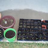 Gardening 2011 - 100_6757.JPG