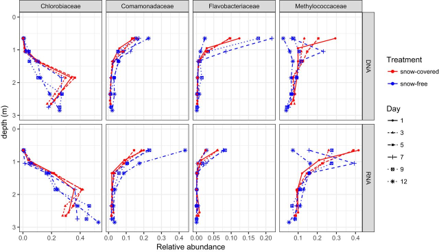 Relative abundance of phototrophic Chlorobiaceae, heterotrophic bacteria (Comamonadaceae and Flavobacteriaceae), and methanotrophic Methylococcaceae in the lake water column during an experiment that removed snow from an anoxic frozen lake. Graphic: Garcia, et al., 2019 / mSphere