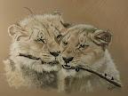 D'après une photo de Jack. 2 Lionceaux au Parc des Félins   50X70 cm  Janvier 2012