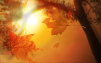 papel de parede folhas