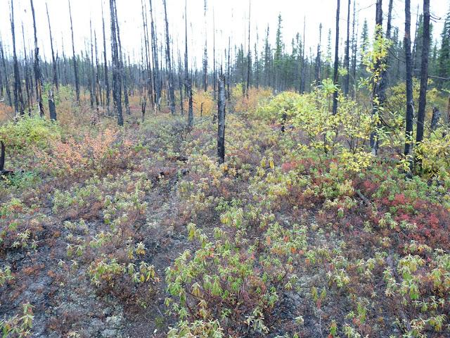 Area burned in 2005