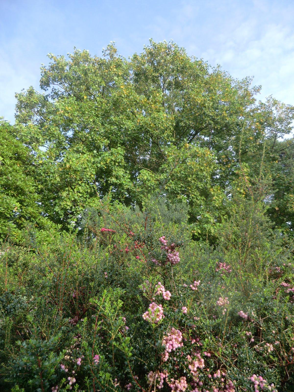 CIMG4645 Garden of Allah, Borde Hill