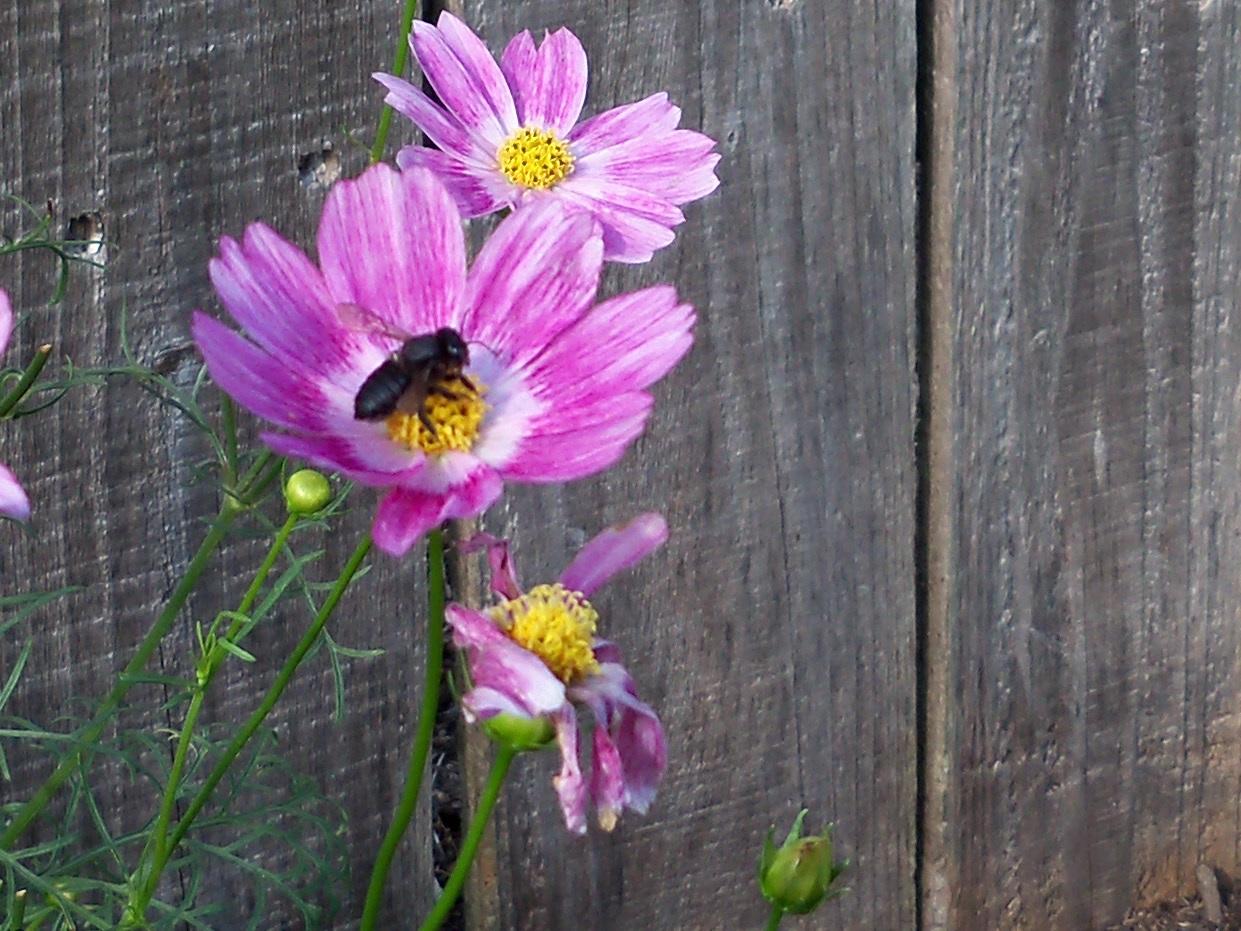 Gardening 2010, Part Two - 101_2496.JPG