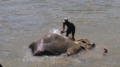 Elephant bath 1
