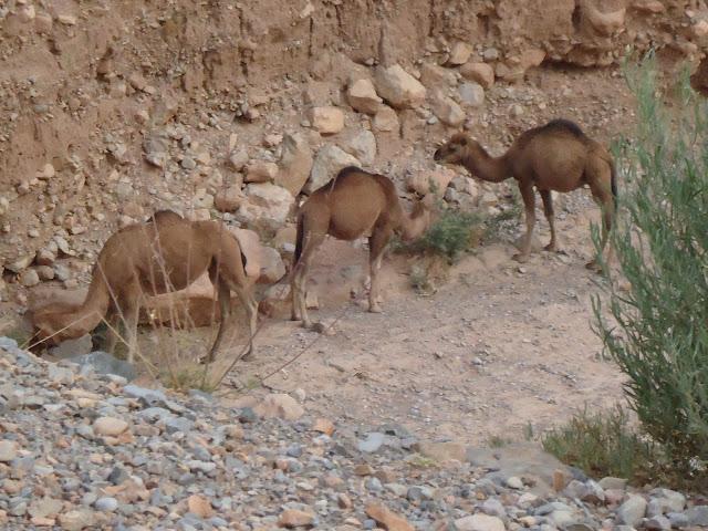 Marrocos 2011 - Página 2 DSC03438